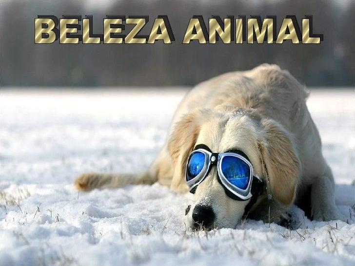 BELEZA ANIMAL