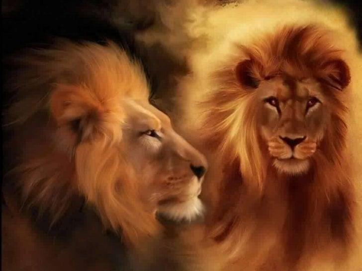 Beleza selvagem Kevin Richardson O amigo dos leões