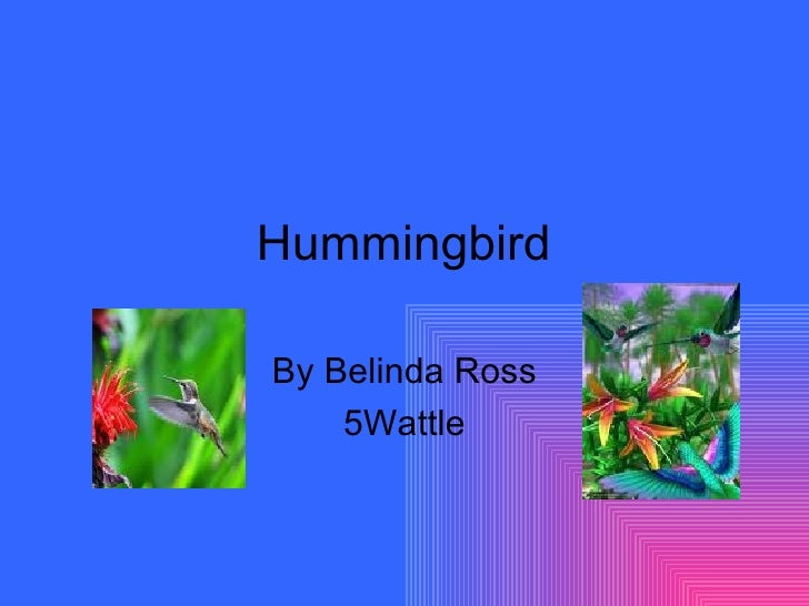Hummingbird  By Belinda Ross 5Wattle