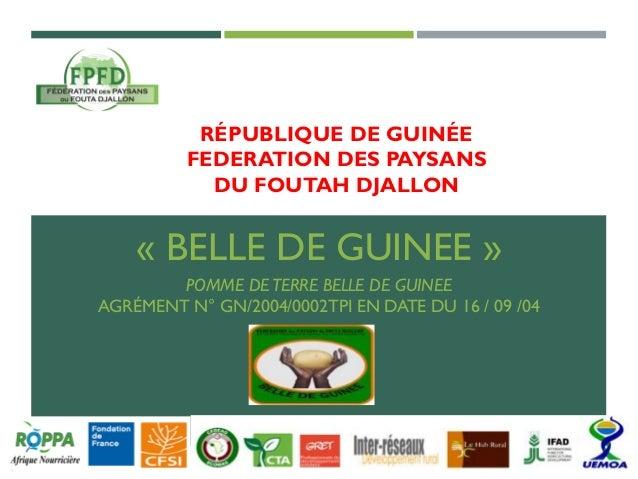RÉPUBLIQUE DE GUINÉE FEDERATION DES PAYSANS DU FOUTAH DJALLON « BELLE DE GUINEE » POMME DETERRE BELLE DE GUINEE AGRÉMENT N...