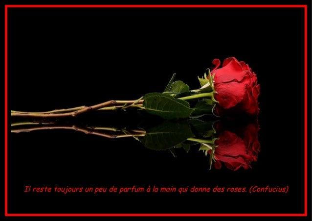 Belles Citations Avec De Belles Fleurs Ja