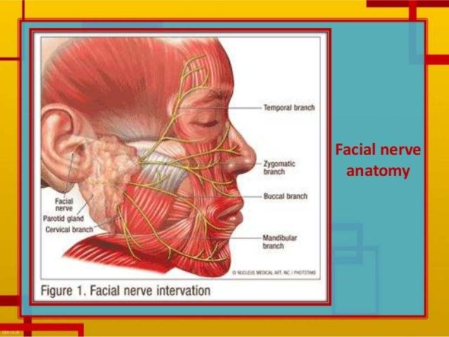 Epstein barr virus facial nerve palsy
