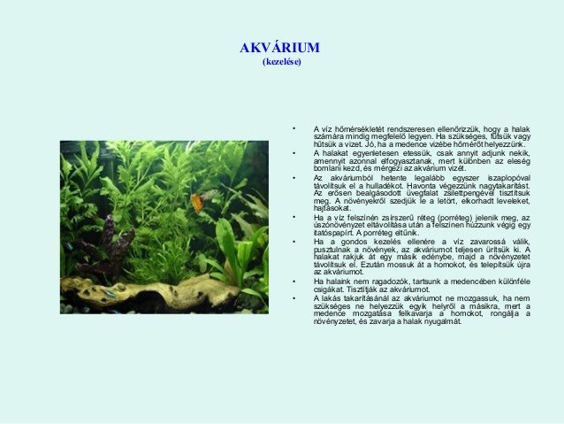 hogyan lehet beakasztani egy akváriumot erők randevú webhely