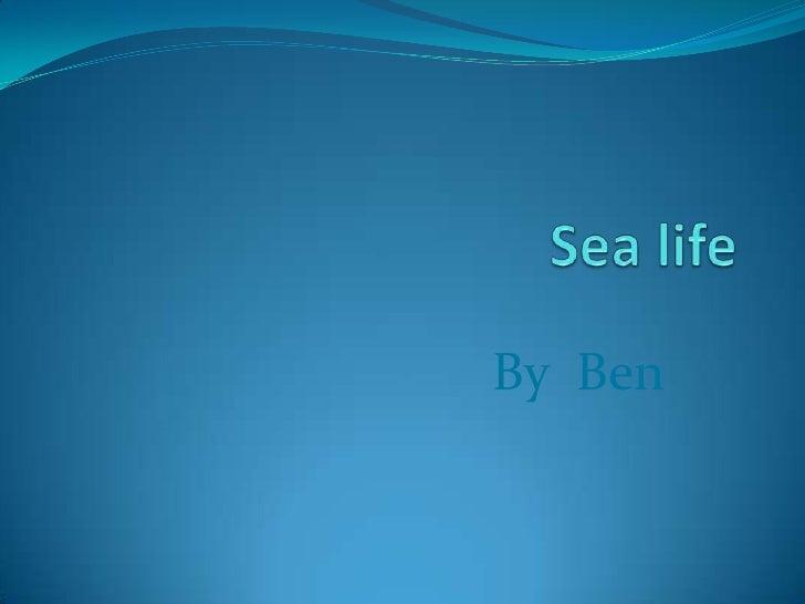 Sea life<br />By  Ben<br />