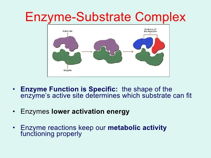 Diagram Enzyme Substrate Complex Manual Guide