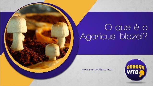 É um cogumelo nativo do Brasil que desperta a atenção de pesquisadores econsumidores de todas as partes do mundo em função...
