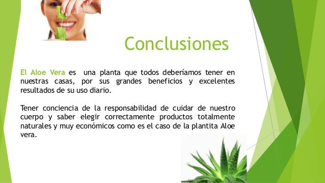 Beneficios del uso de aloe - Como cuidar la planta de aloe vera ...