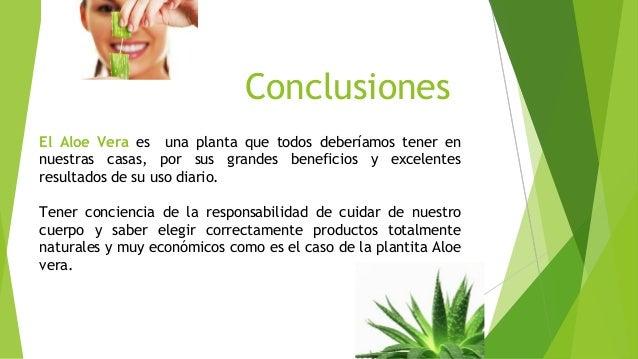Beneficios del uso de aloe vera final - Como cuidar la planta de aloe vera ...