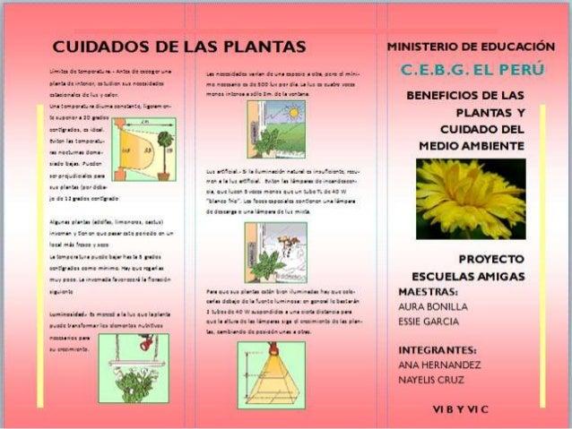 Beneficio y cuidado de las plantas en el medio ambiente c e b g el p - Cuidados de las hortensias ...