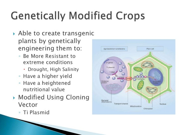 the benefits behind genetic engineering Full-text paper (pdf): benefits and risks of genetic engineering in agriculture.