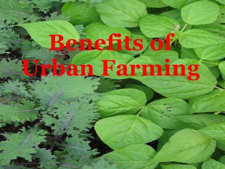 Benefits of Urban Farming