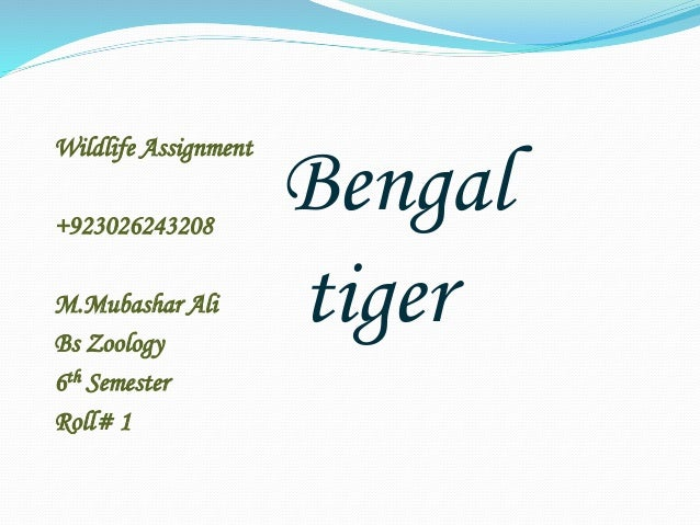Wildlife Assignment  +923026243208  M.Mubashar Ali  Bs Zoology  6th Semester  Roll# 1  Bengal  tiger