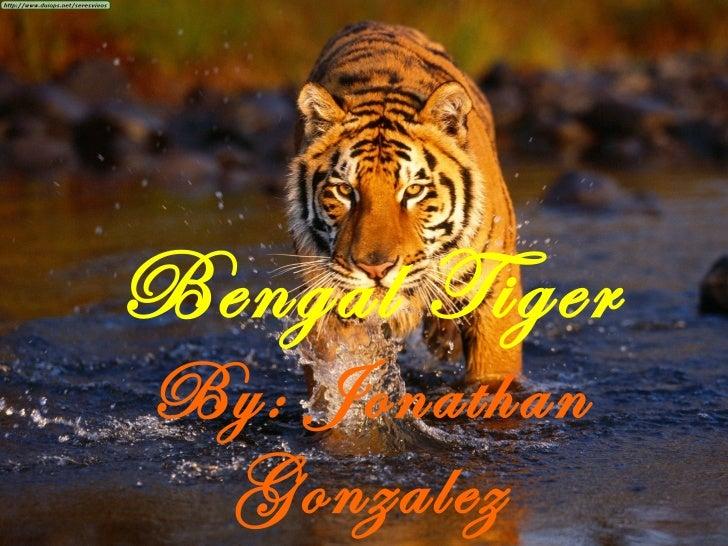 Bengal Tiger By: Jonathan Gonzalez