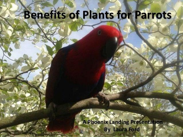 Benefits of Plants for ParrotsA Phoenix Landing PresentationBy Laura Ford