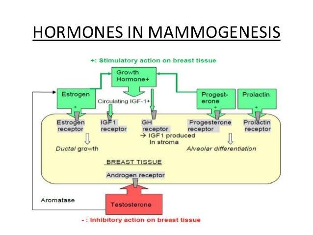 9 HORMONES IN MAMMOGENESIS