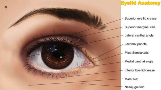 Benign Eyelid Tumors