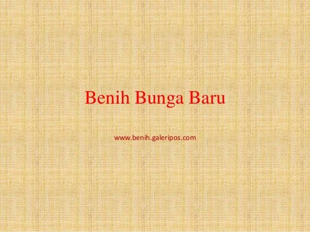 Benih Bunga Baru www.benih.galeripos.com