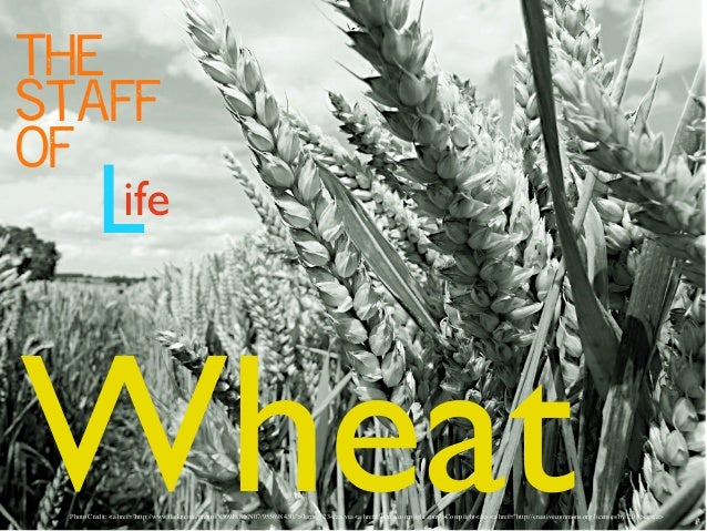 """The Staff of  L  ife  Wheat  Photo Credit: <a href=""""http://www.flickr.com/photos/8369188@N07/955698430/"""">Jams_123</a> via <..."""