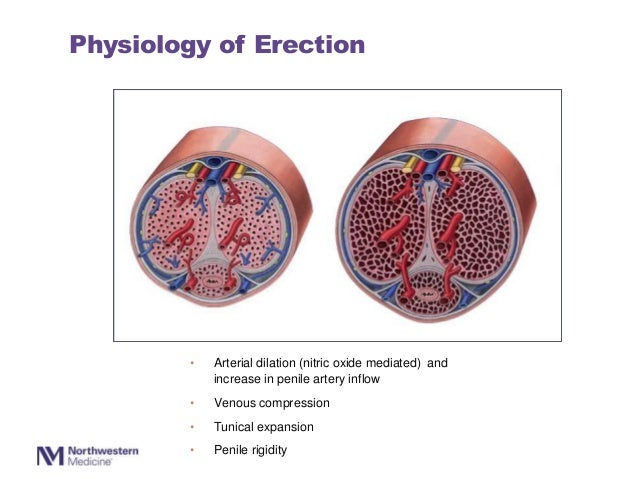 Erectile Dysfunction and Scleroderma: Evaluation and Managament