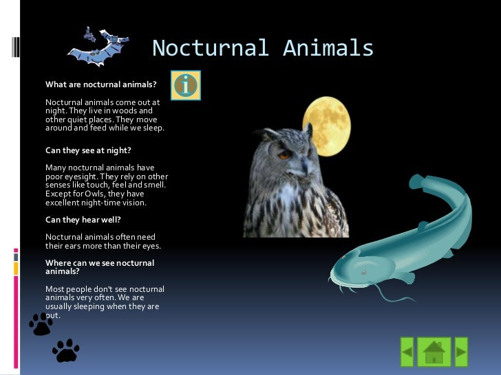 nocturnal-animals-3-728.jpg?cb=1305143779