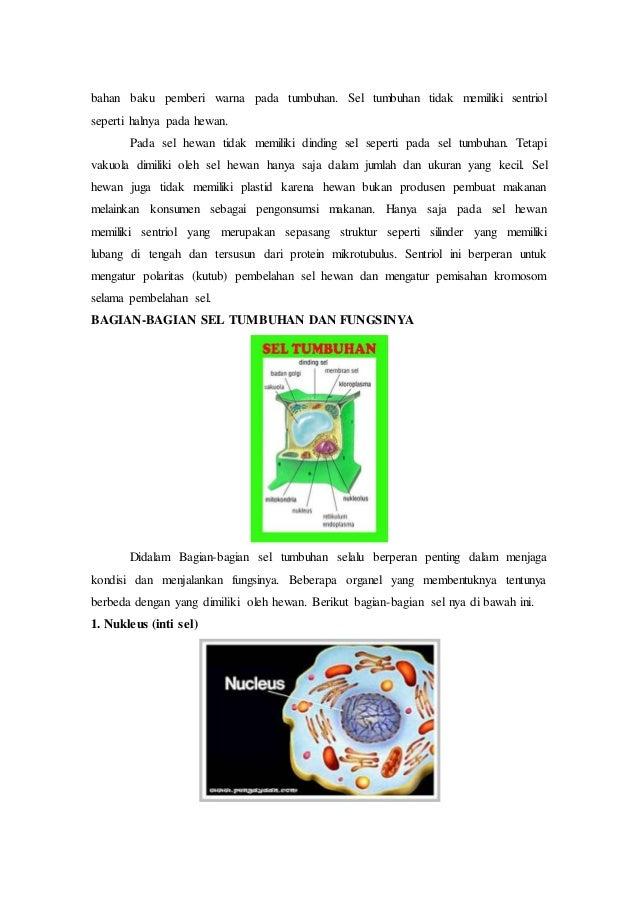 97 Koleksi Gambar Sel Hewan Dan Tumbuhan Beserta Penjelasan Nya Terbaru
