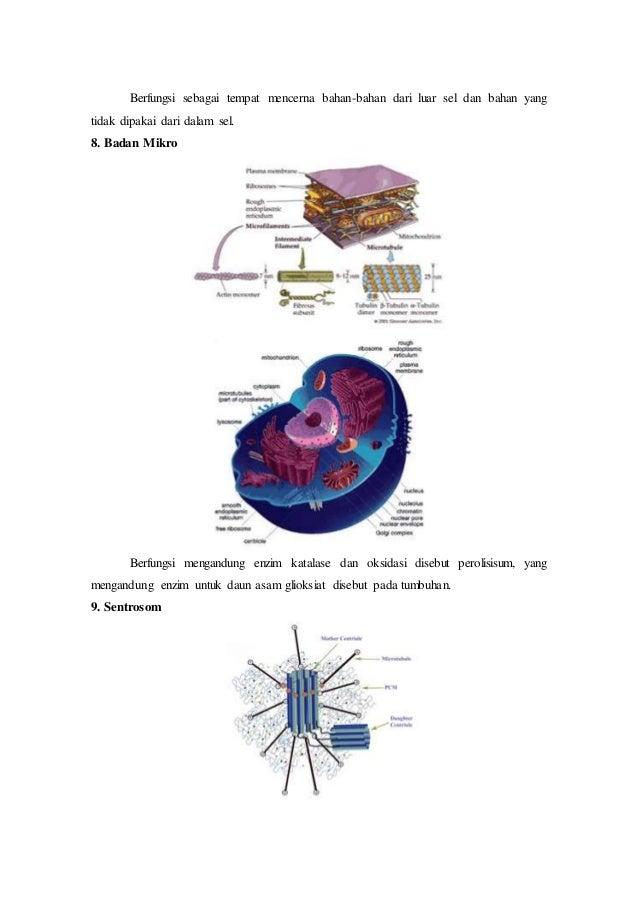 Bentuk sel hewan dan tumbuhan beserta penjelasan dan fungsinya