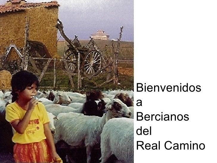 Bienvenidos a Bercianos del Real Camino