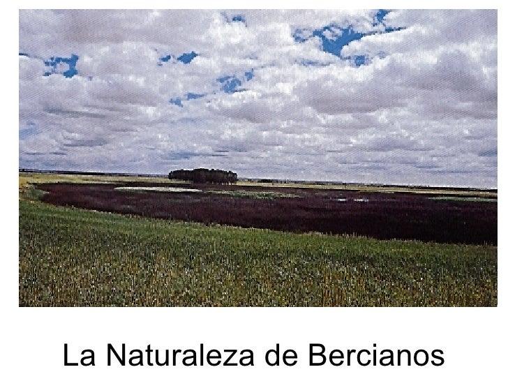 La Naturaleza de Bercianos