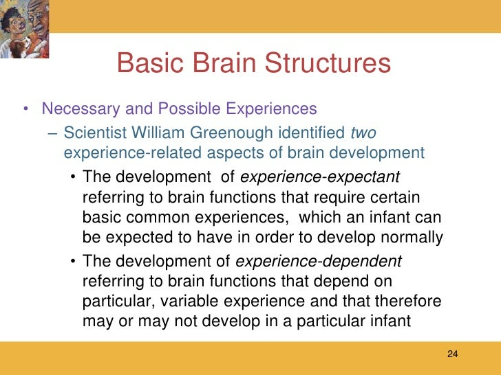 experience dependent brain growth