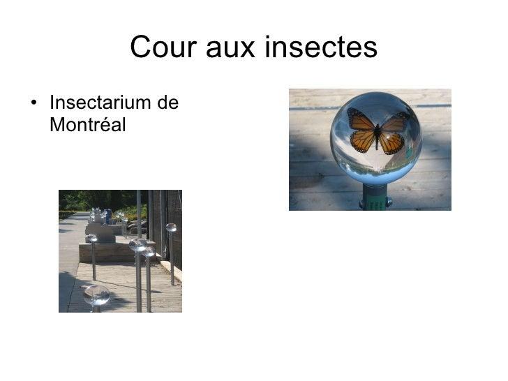 Cour aux insectes <ul><li>Insectarium de Montréal </li></ul>