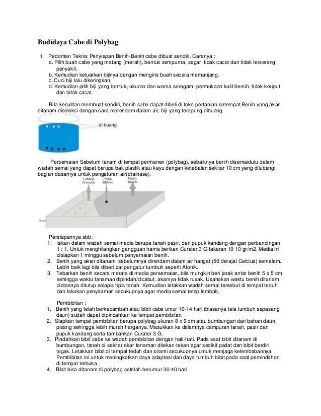 Budidaya Cabe di Polybag 1. Pedoman Teknis Penyiapan Benih-Benih cabe dibuat sendiri. Caranya : a. Pilih buah cabe yang ma...