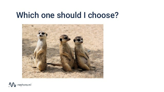 Which one should I choose?