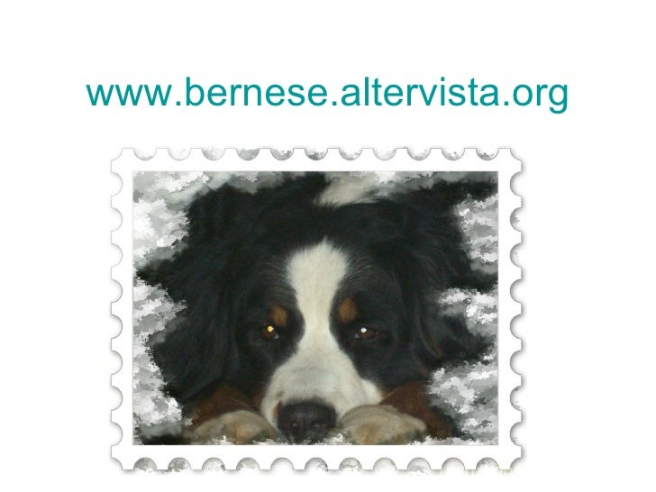 www.bernese.altervista.org