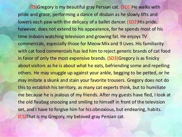 (TS)Gregory is my beautiful gray Persian cat. (SD1)He walks with pride and grace, performing a dance of disdain as he slow...