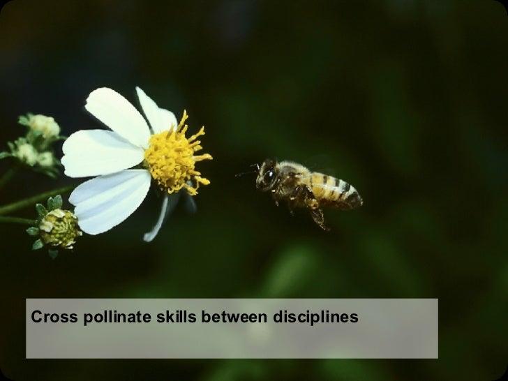 Cross pollinate skills between disciplines