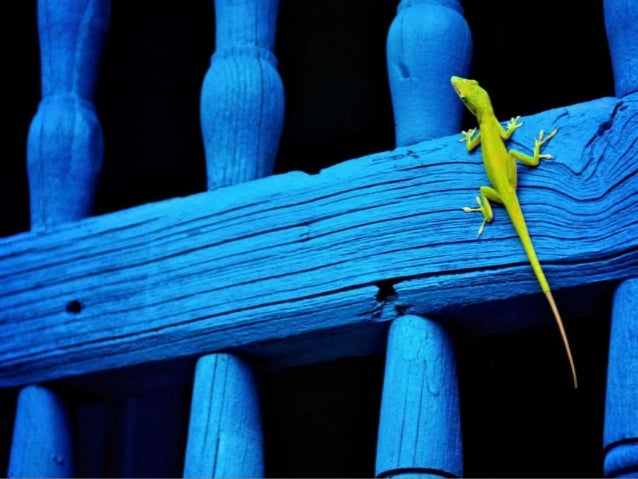 Best 20 Photographs of National Geographic