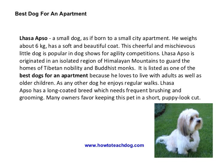 best dog for an apartment. Black Bedroom Furniture Sets. Home Design Ideas