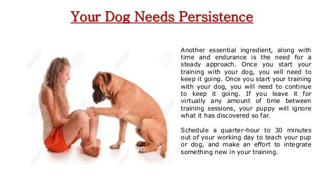 Dog Training Taunton