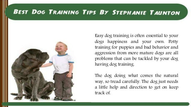Dog Training Taunton