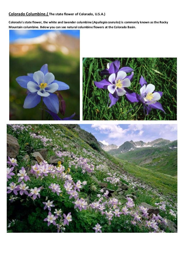 BEST FLOWERS IN THE WORLD Slide 2