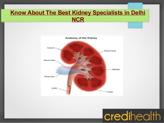 Know About The Best Kidney Specialists in Delhi NCR