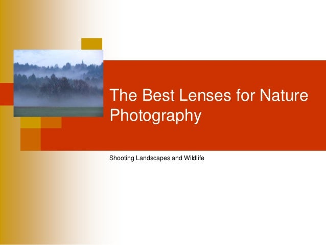 The Best Lenses for NaturePhotographyShooting Landscapes and Wildlife