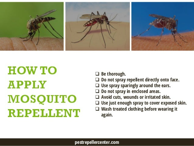 Best Mosquito Repellent - How to Efficiently Prevent Mosquito Bites - 웹