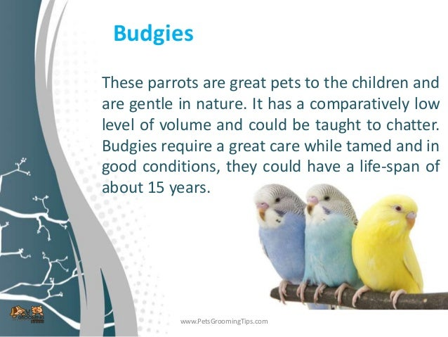 Best pet birds for kids