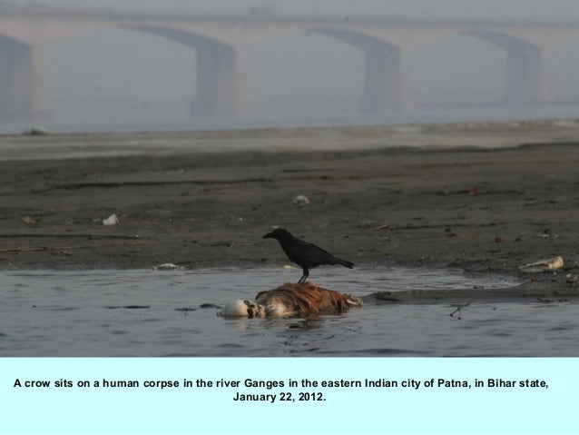 A crow sits on a human corpse in the river Ganges in the eastern Indian city of Patna, in Bihar state,                    ...