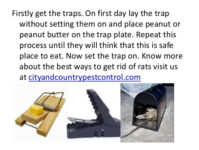 how to get rid of the smell from rats