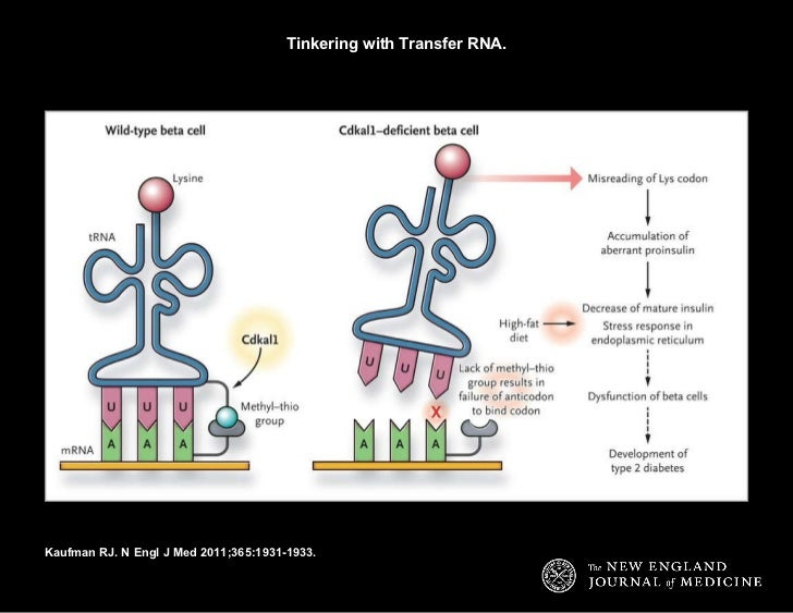 Tinkering with Transfer RNA. Kaufman RJ. N Engl J Med 2011;365:1931-1933.