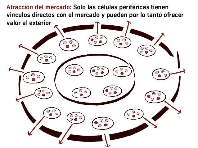 Atracción del mercado: Solo las células periféricas tienen vinculos directos con el mercado y pueden por lo tanto ofrecer ...
