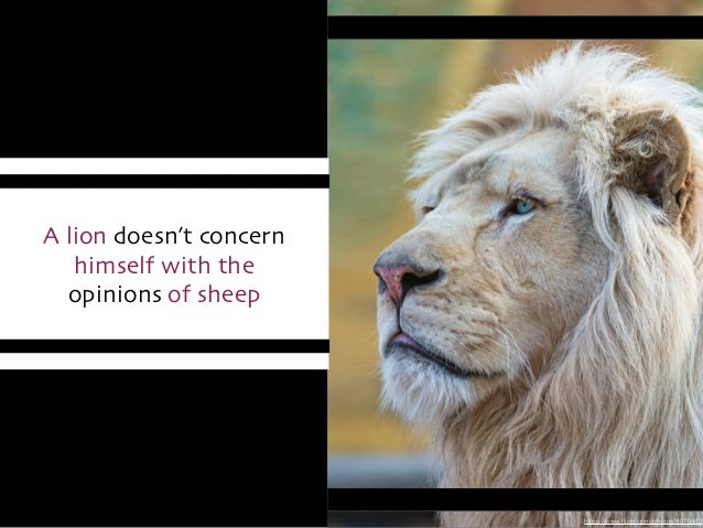 https://www.flickr.com/photos/8070463 A lion doesn't concern   himself with the   opinions of sheep