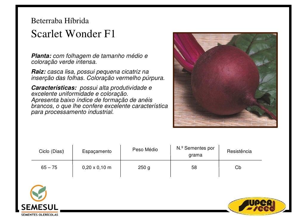 Beterraba Híbrida Scarlet Wonder F1 Planta: com folhagem de tamanho médio e coloração verde intensa. Raiz: casca lisa, pos...